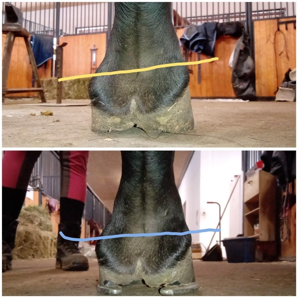 Расчистка и ковка лошадей в Москве 89019832969 купить 3