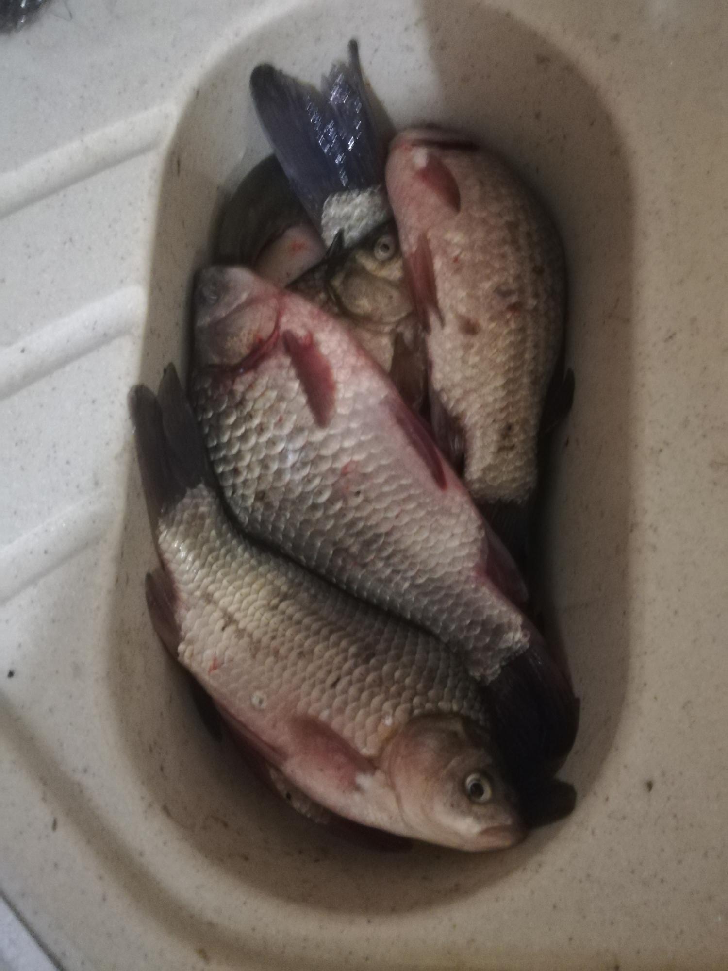 Рыба заморож в Орле 89534747766 купить 1