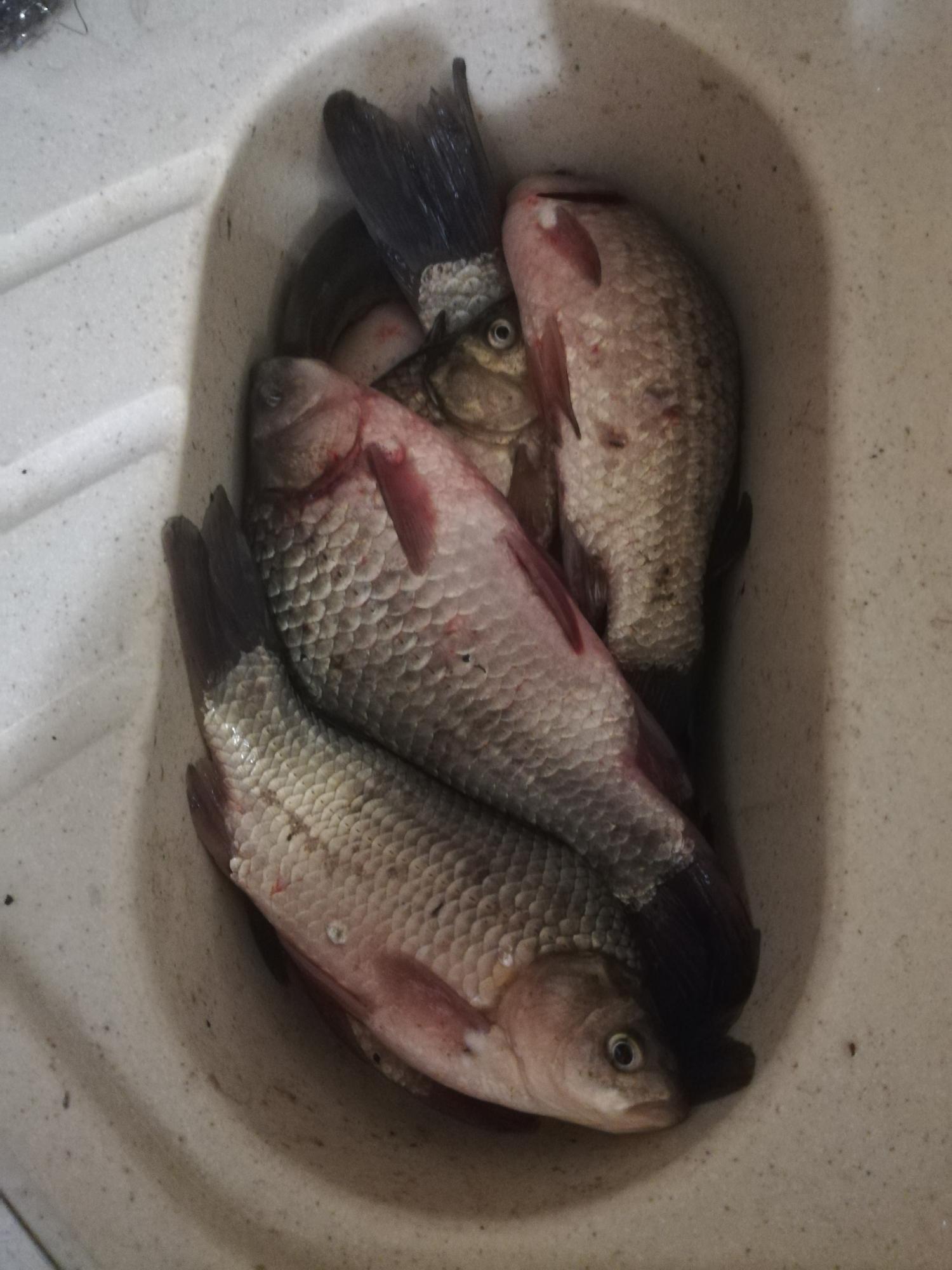 Рыба заморож в Орле 89534747766 купить 2