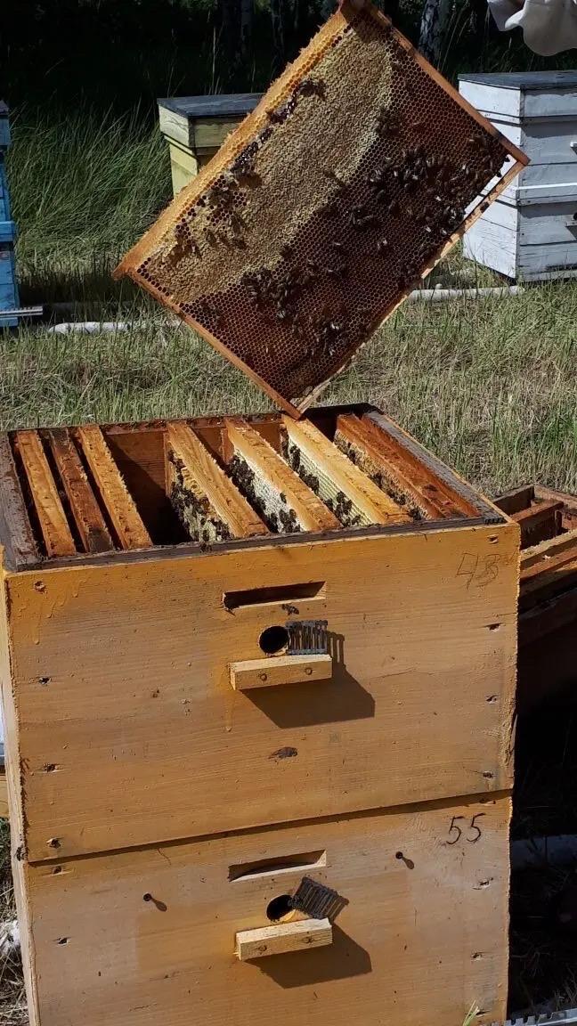 Мед натуральный в Красногорске купить 4