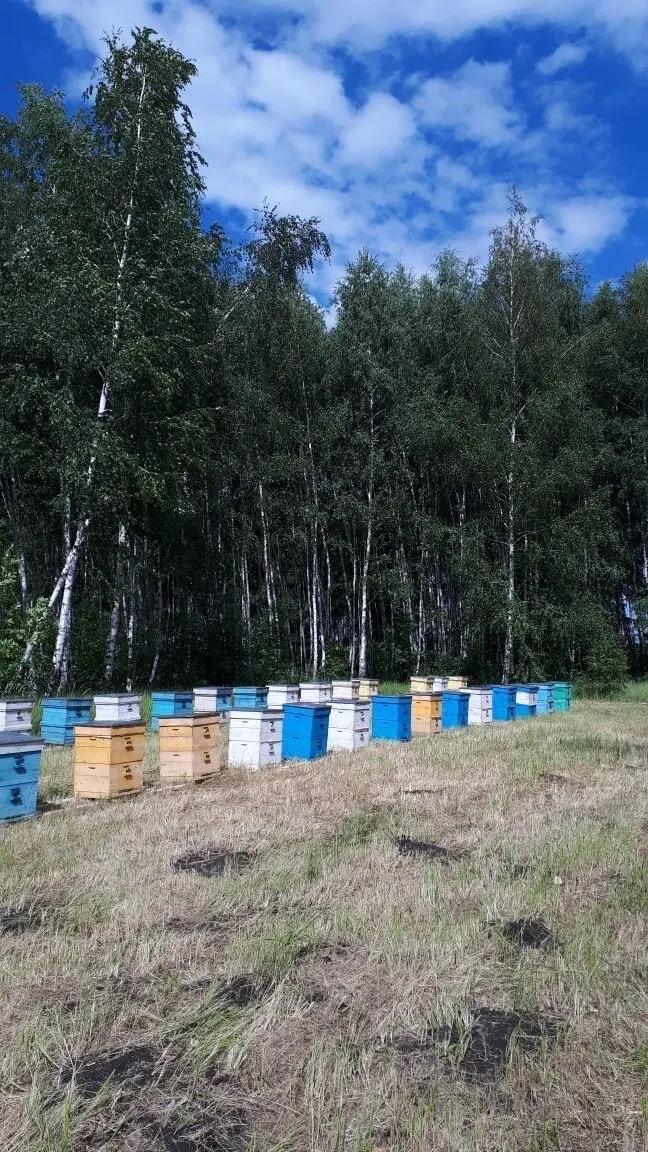 Мед натуральный в Красногорске купить 5