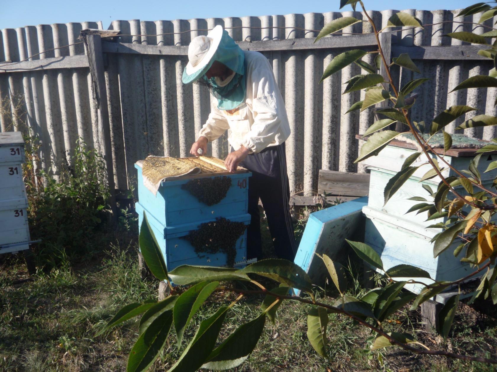 Мед натуральный в Красногорске купить 6