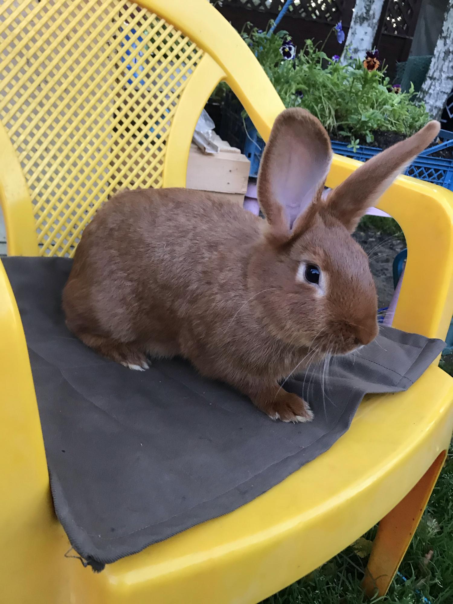Кролики новозеландские в Москве 89036742588 купить 2