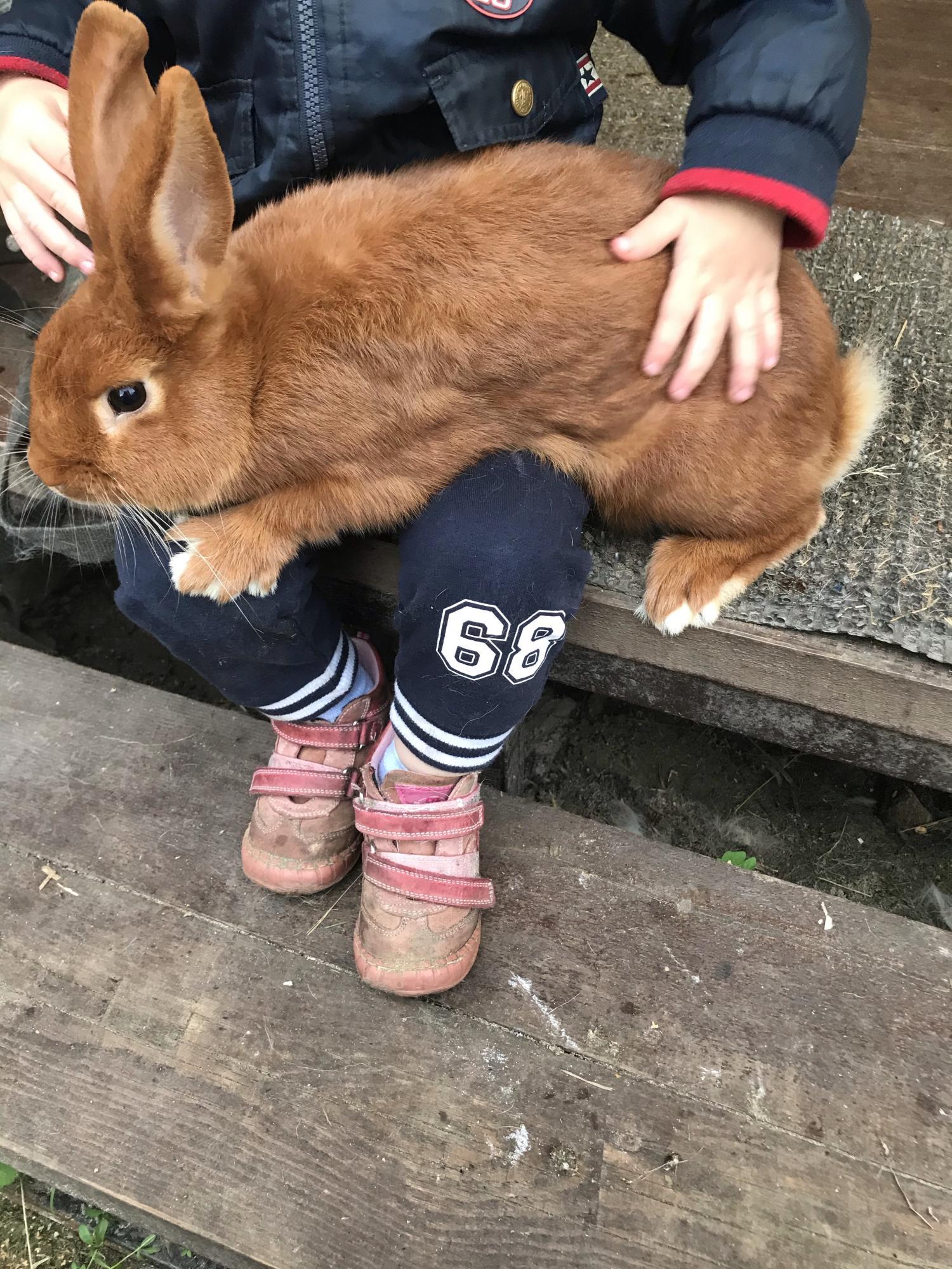 Кролики новозеландские в Москве 89036742588 купить 3