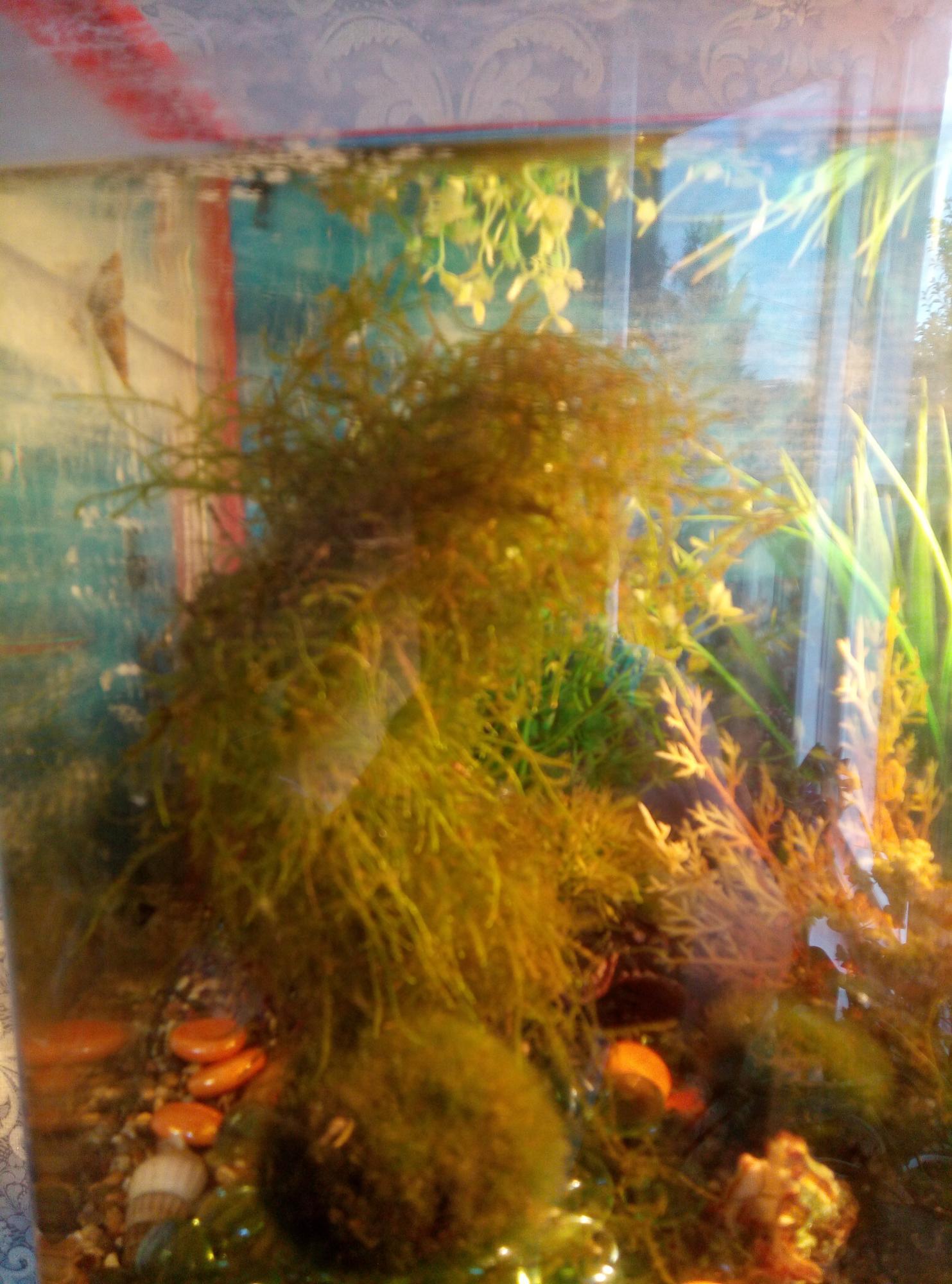 Аквариумные растения в Фрязино