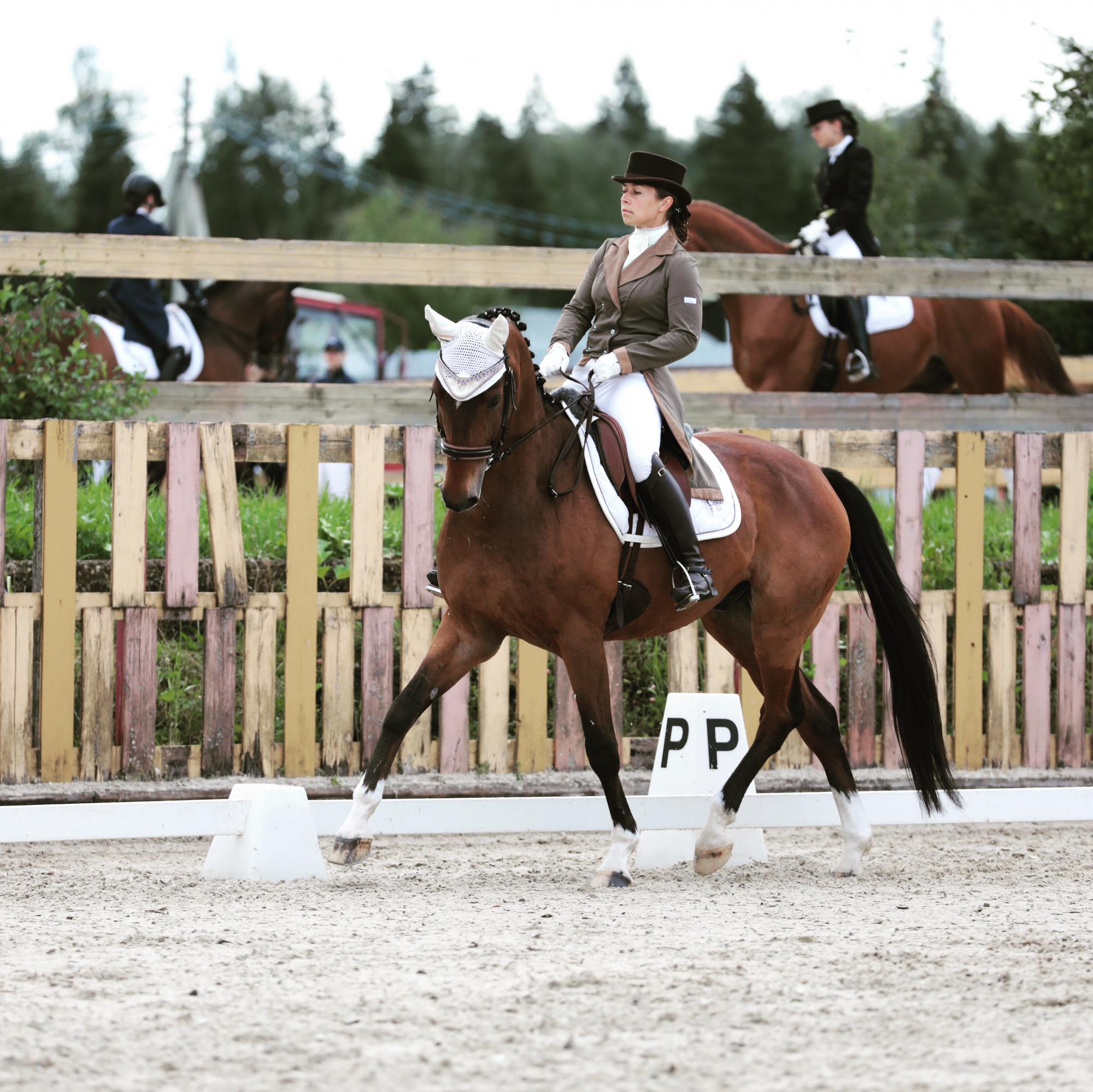 Среднепризный конь в Москве 89175571009 купить 1