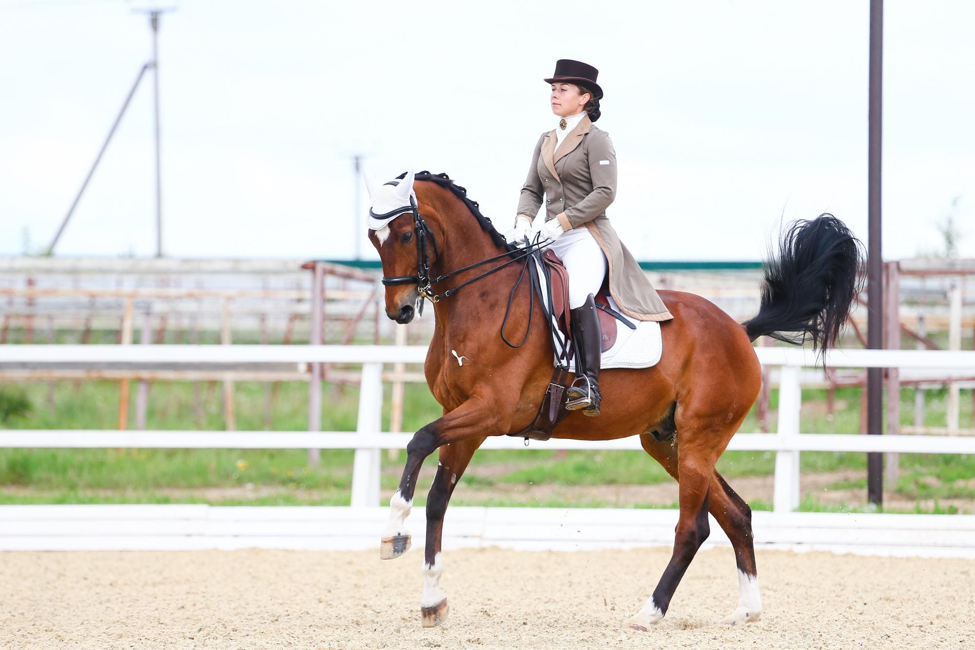 Среднепризный конь в Москве купить 2