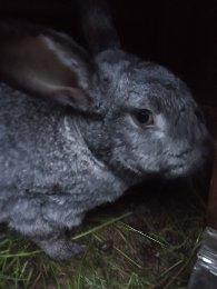 Кролики в Красноармейске купить 1