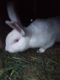 Кролики в Красноармейске купить 2