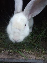 Кролики в Красноармейске купить 3