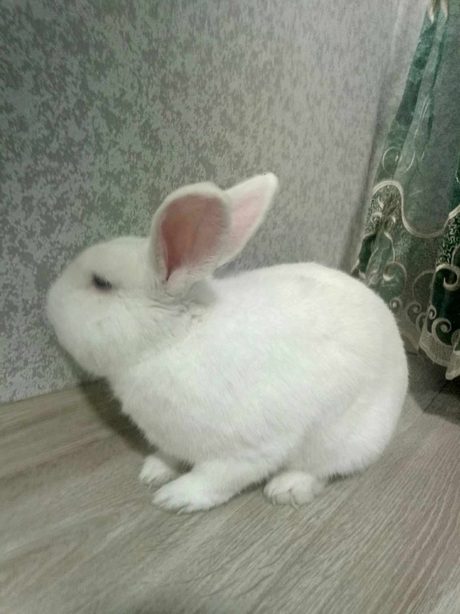 Кролик с клеткой и тд. в Московском